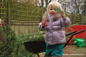 Matilda with a Christmas tree branch