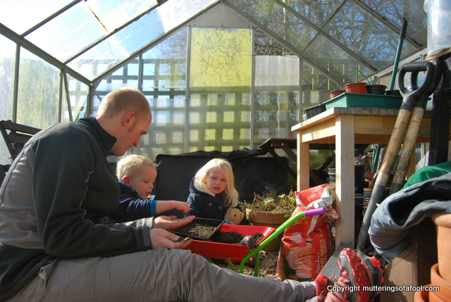 Planting seeds in greenhouse