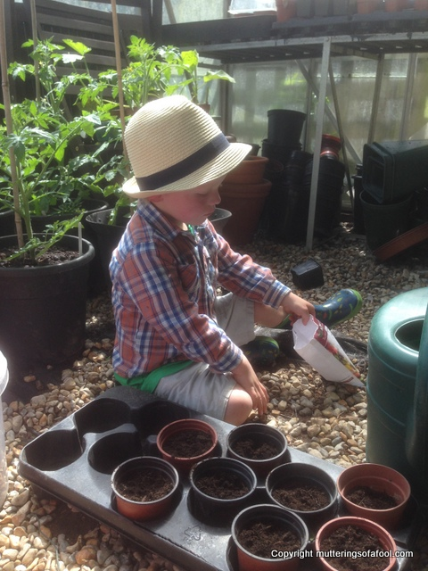 Henry planting seeds