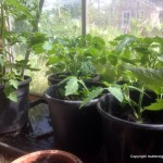 Repotting and rats